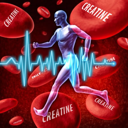Creatine Stored In Muscle Groups