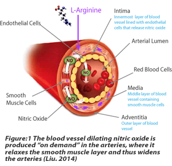 The blood vessel dilating nitric oxide is