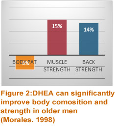 DHEA can improve body composition and strength