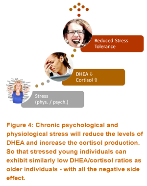 chronic stress will reduce levels of DHEA