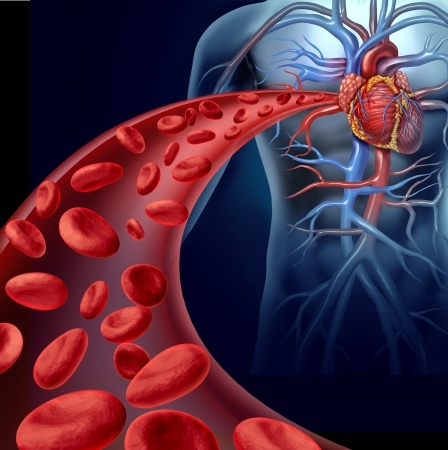 Nitric Oxide Increases Blood To Muscles