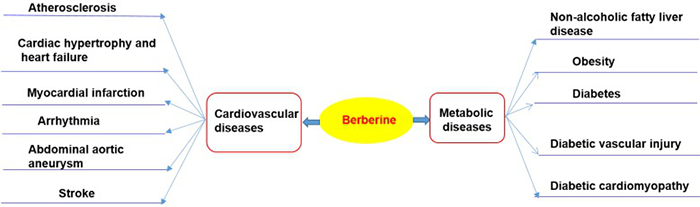Therapeutic potential of BBR in cardiometabolic diseases