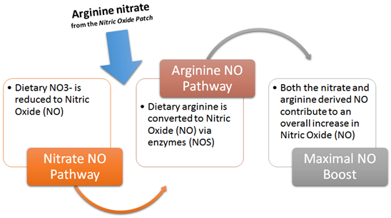The reformulated nitric oxide patch feeds into both pathways, the arginine NO pathway (classic) and the nitrate NO pathway to maximally boost your NO levels.